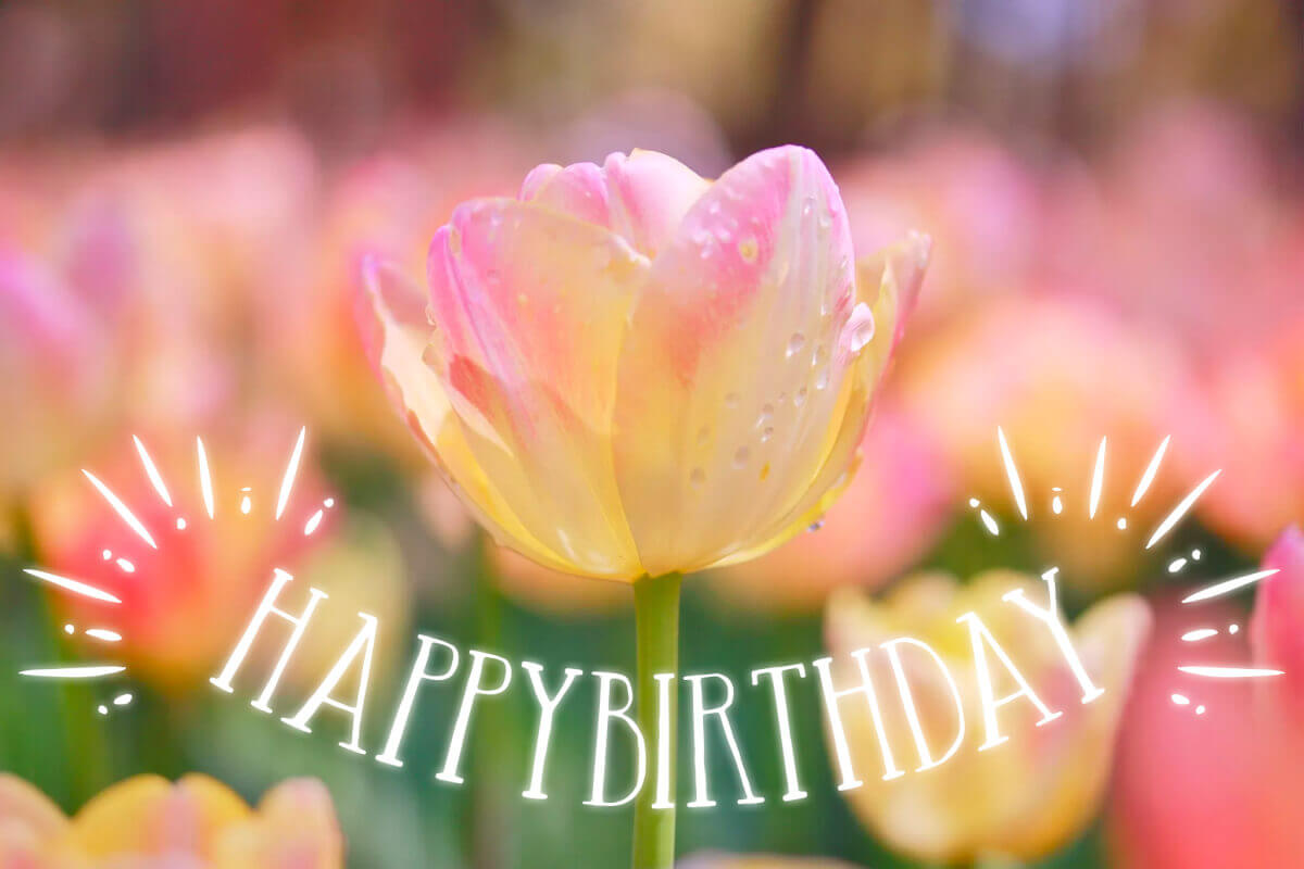 「お誕生日おめでとう」